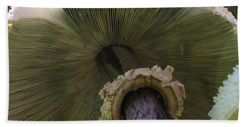 Plant Beach Towel featuring the photograph Mushroom Down Under by Bruce Bley