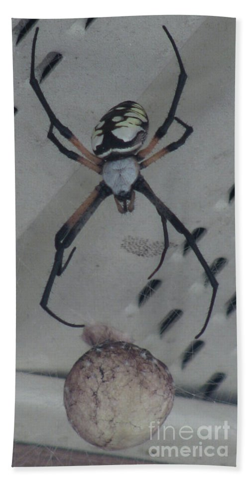 Spider Beach Towel featuring the photograph My Babies by Donna Brown