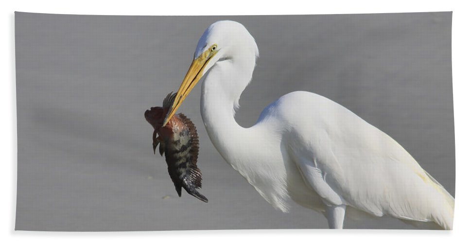 Giant Egret Beach Towel featuring the photograph My Catch At The Beach by Deborah Benoit