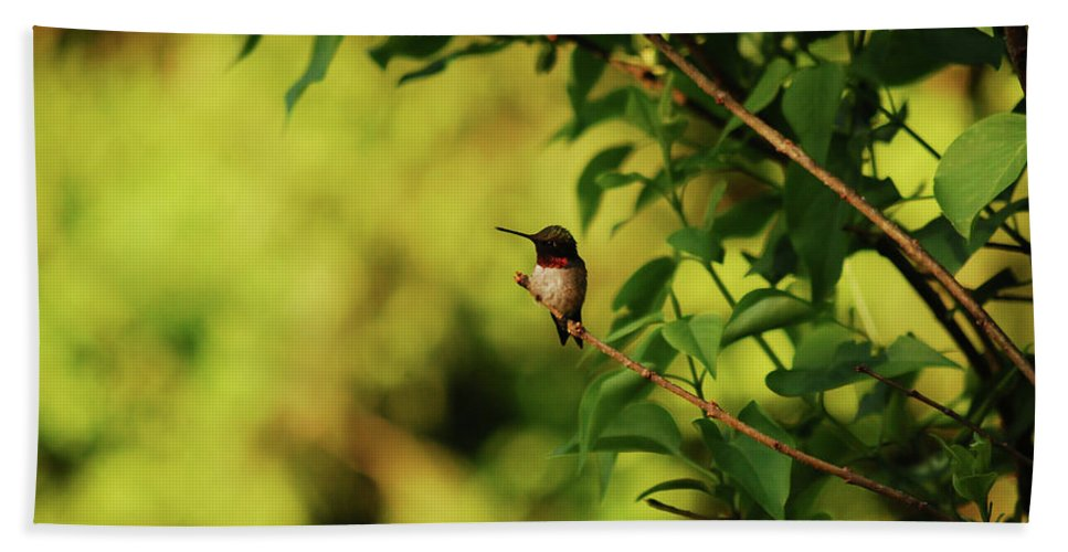 Hummingbird Beach Towel featuring the photograph My Little Visitor by Lori Tambakis