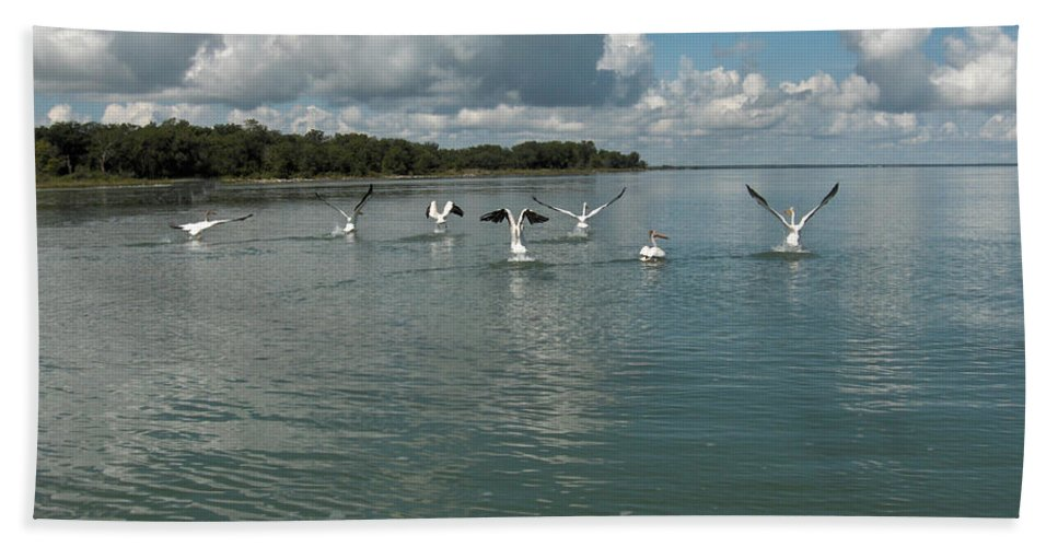 Pelicans Lake Water Trees Shore Beach Clouds Birds Water Foul Beach Towel featuring the photograph My Pelicans by Andrea Lawrence