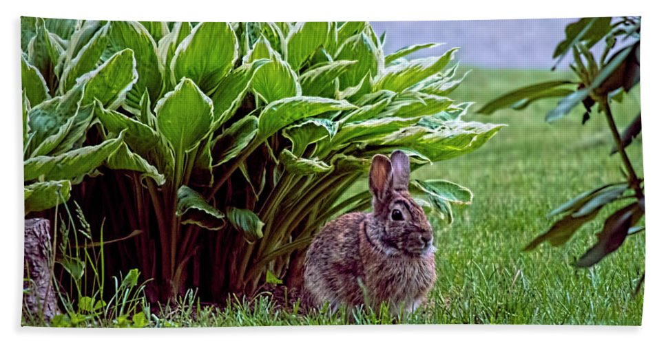 Bunny Beach Towel featuring the photograph My Peter Rabbit by ChelleAnne Paradis