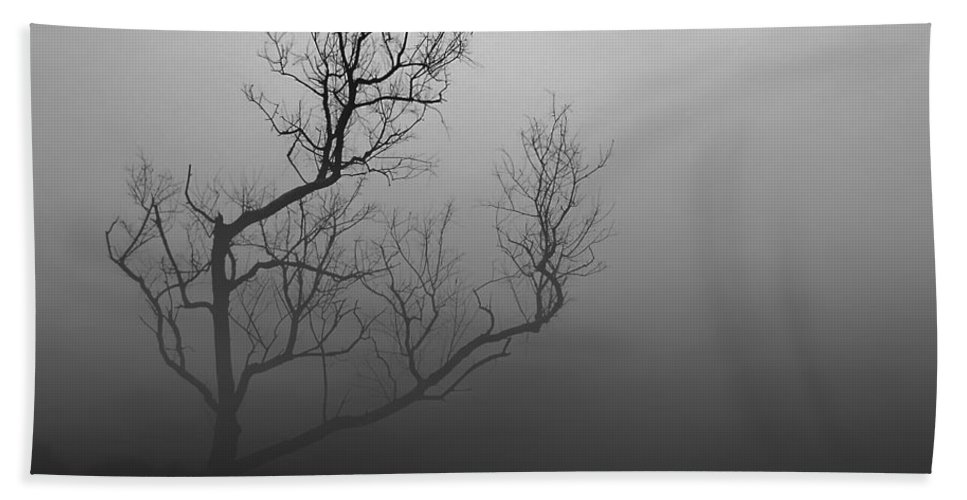 2d Beach Towel featuring the photograph Mysterious Tree by Brian Wallace