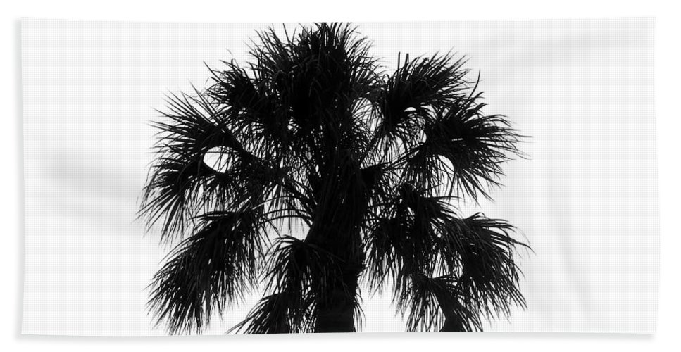 Palm Tree Beach Towel featuring the photograph Naked Palm by David Lee Thompson