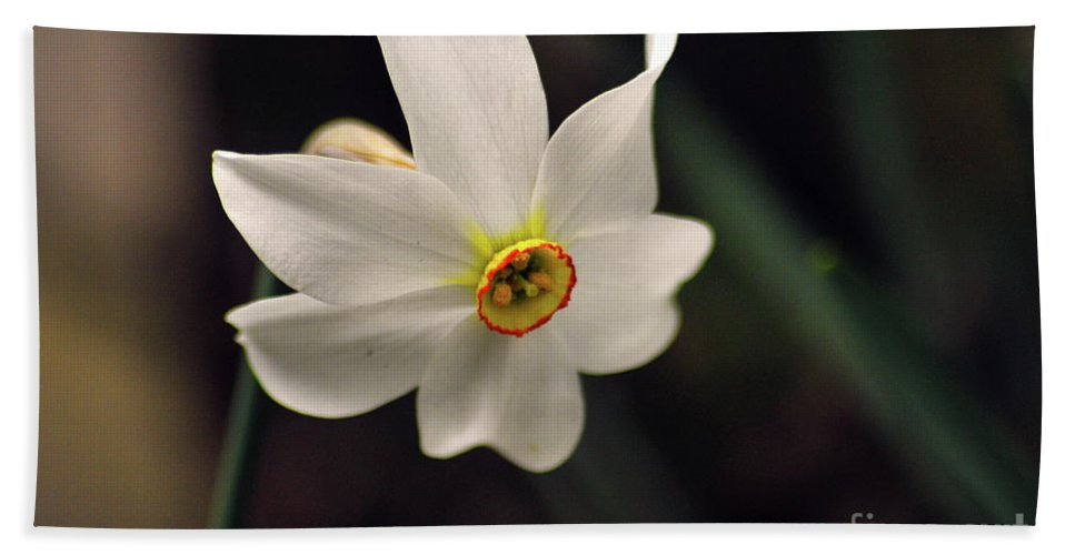 Narcissus Beach Towel featuring the photograph Narciso by Ilaria Andreucci