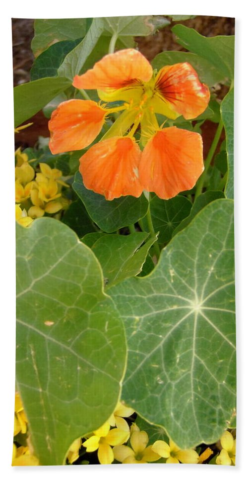 Flowers Beach Towel featuring the photograph Nasturtium by Stephanie Moore