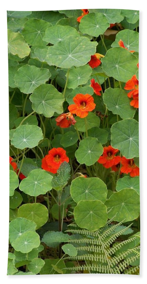 Nasturtiums Beach Sheet featuring the photograph Nasturtiums by Gale Cochran-Smith