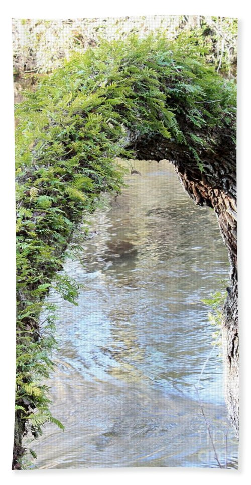 Florida Landscape Beach Towel featuring the photograph Natural Archway Over Hillsborough River by Carol Groenen