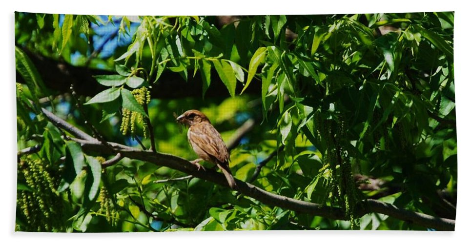 Bird Beach Towel featuring the photograph Natural Insect Repellant by Eric Liller