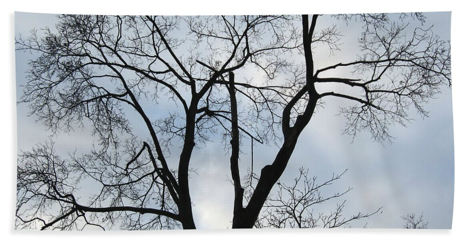 Nature Beach Towel featuring the photograph Nature - Tree in Toronto by Munir Alawi