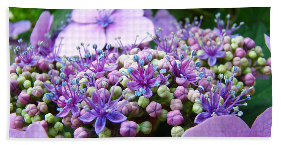 Nature Beach Towel featuring the photograph Nature Floral Art Prints Purple Hydrangea Flowers Baslee Troutman by Baslee Troutman