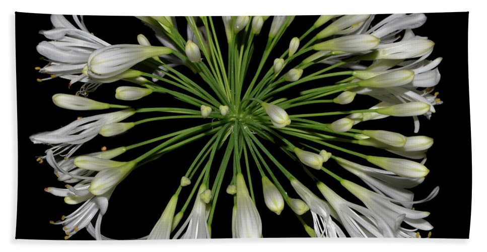 Nature Beach Towel featuring the photograph Natures Fireworks - Lily Of The Nile 005 by George Bostian