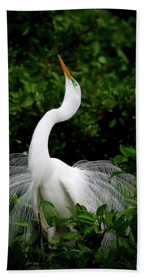 Great Egret Beach Towel featuring the photograph Nature's Glory by Dennis Goodman