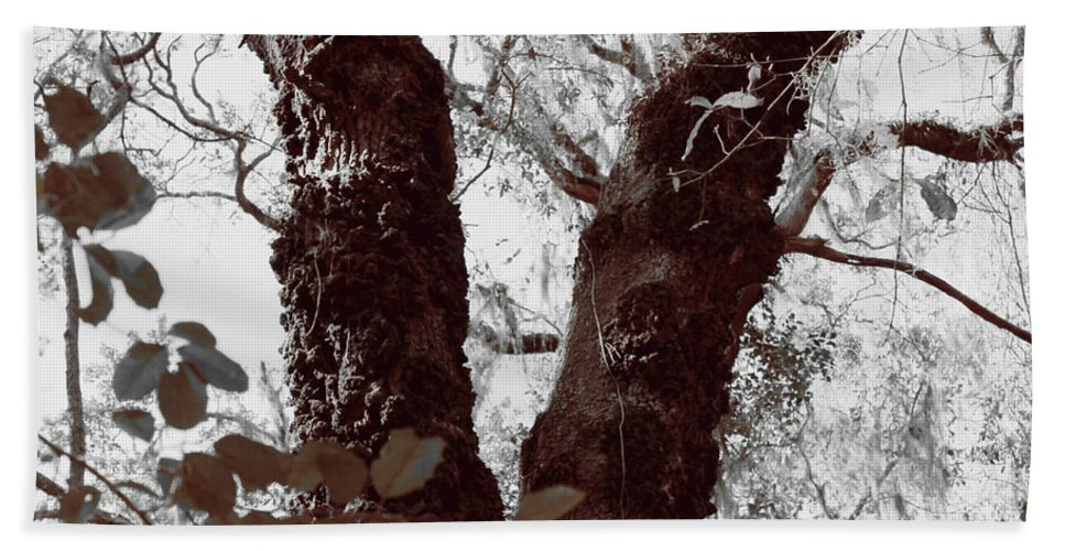 Shannon Beach Towel featuring the photograph Nature's Peace Sign by Shannon Sears