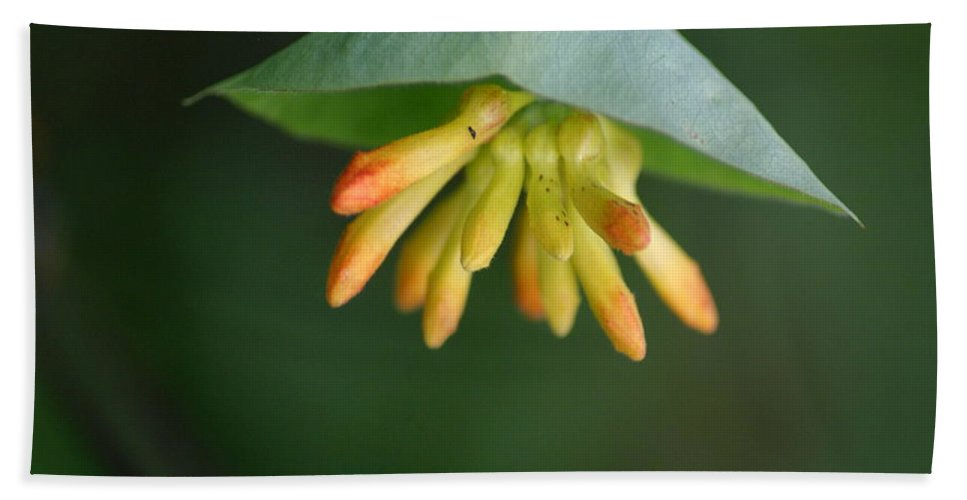 Flowers Beach Towel featuring the photograph Nature's Umbrella by Ben Upham III