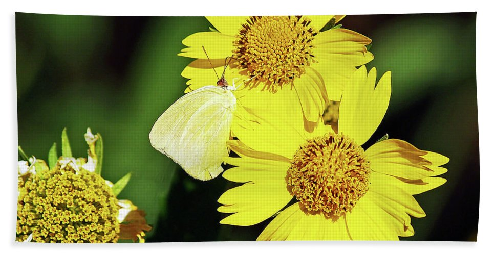 Fine Art Photography Beach Towel featuring the photograph Nectar Seeker by Patricia Griffin Brett