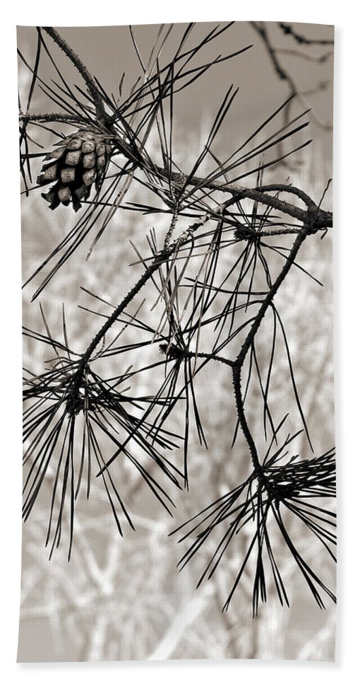 Tree Beach Sheet featuring the photograph Needles Everywhere by Marilyn Hunt