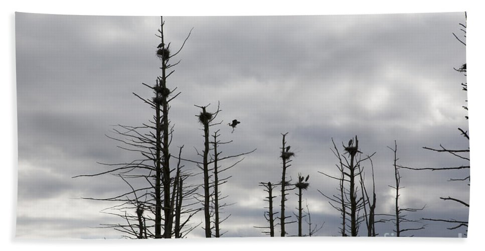 Wildlife Beach Sheet featuring the photograph Nesting Blue Herons by Erin Paul Donovan