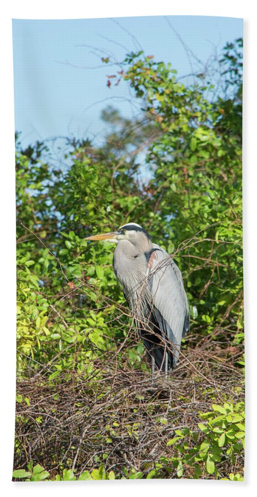 New Nest For Great Blue Heron Beach Towel featuring the photograph New Nest For Great Blue Heron by William Tasker