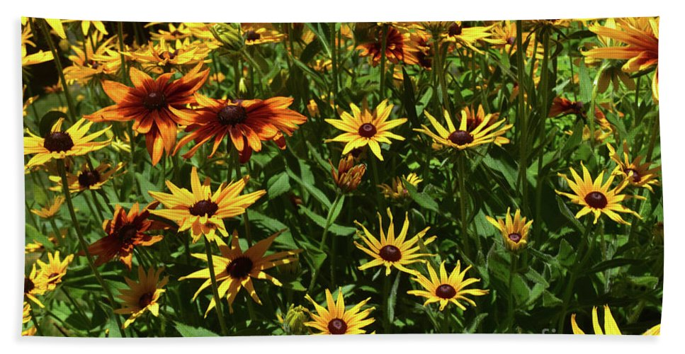 Black-eyed-susan Beach Towel featuring the photograph Nice Close Up Of Black Eyed Susans In Nature by DejaVu Designs