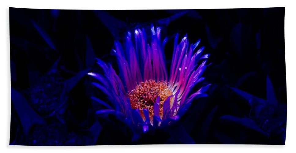 Flower Beach Towel featuring the photograph Night Glow by Charleen Treasures