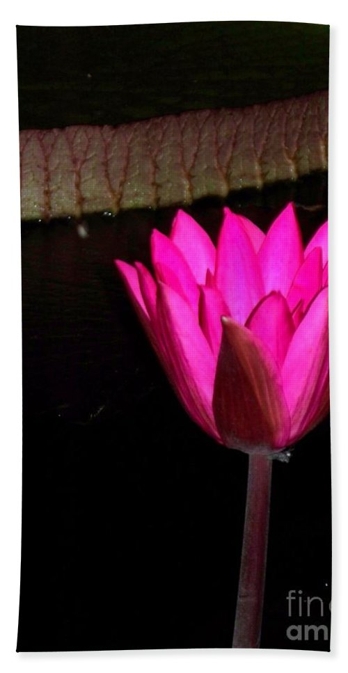 Photograph Beach Towel featuring the photograph Night Time Lily Monet by Eric Schiabor