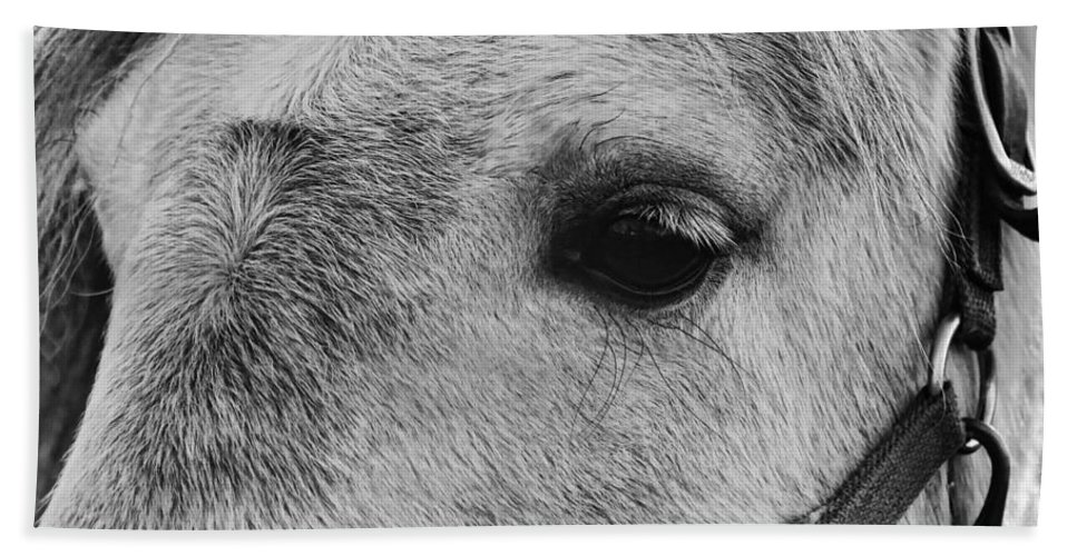 Horse Beach Sheet featuring the photograph Noble Horse by Dressage Design