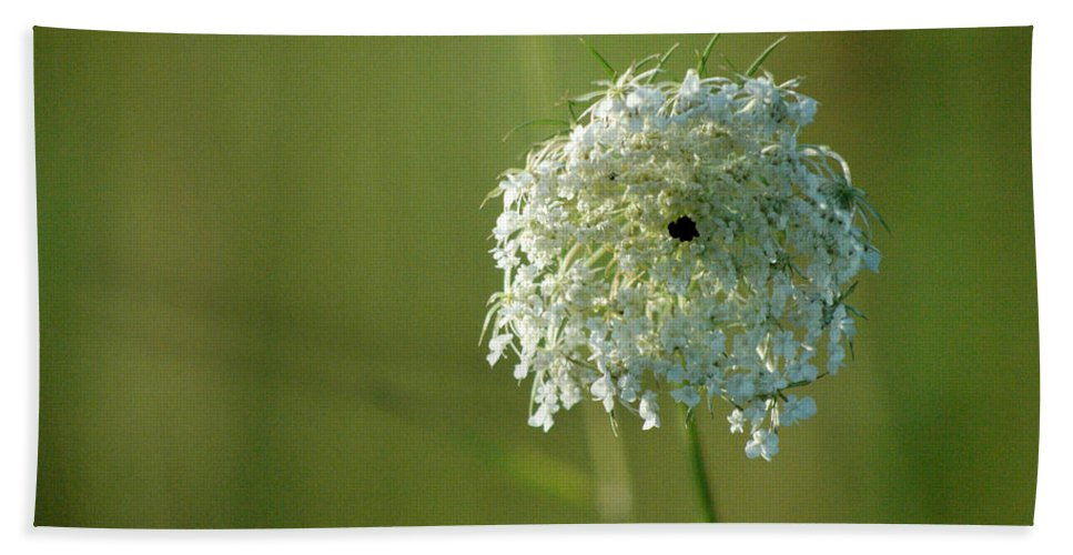 Nature Beach Towel featuring the photograph Not Just A Weed by Trish Hale