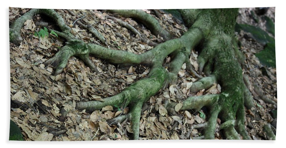 Trees Beach Towel featuring the photograph Nourishment by Amanda Barcon