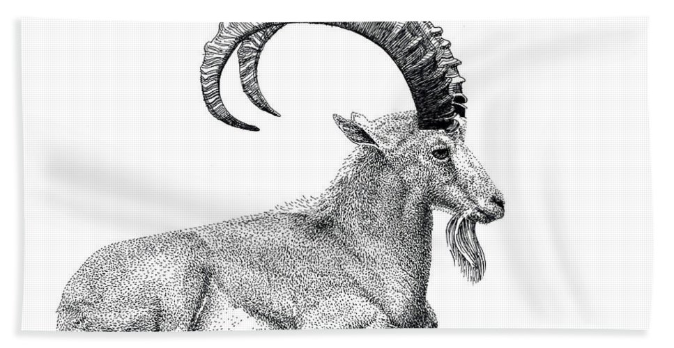 Nubian Ibex Beach Towel featuring the drawing Nubian Ibex by Scott Woyak