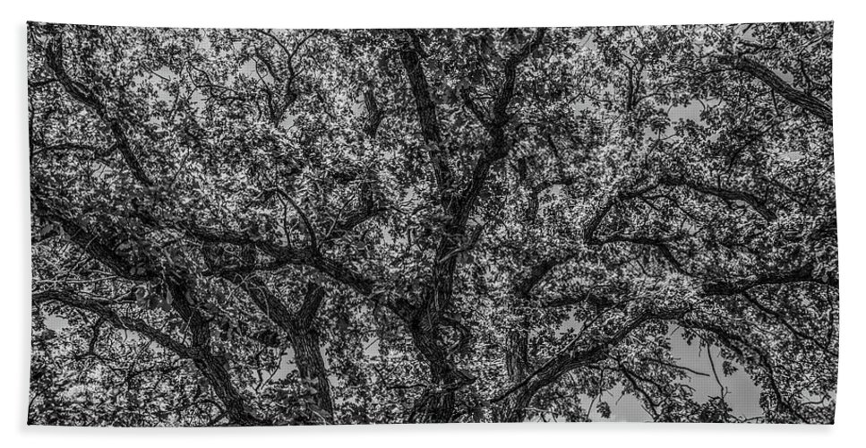 Oak Beach Towel featuring the photograph Oak Abstract by Peter Bouman