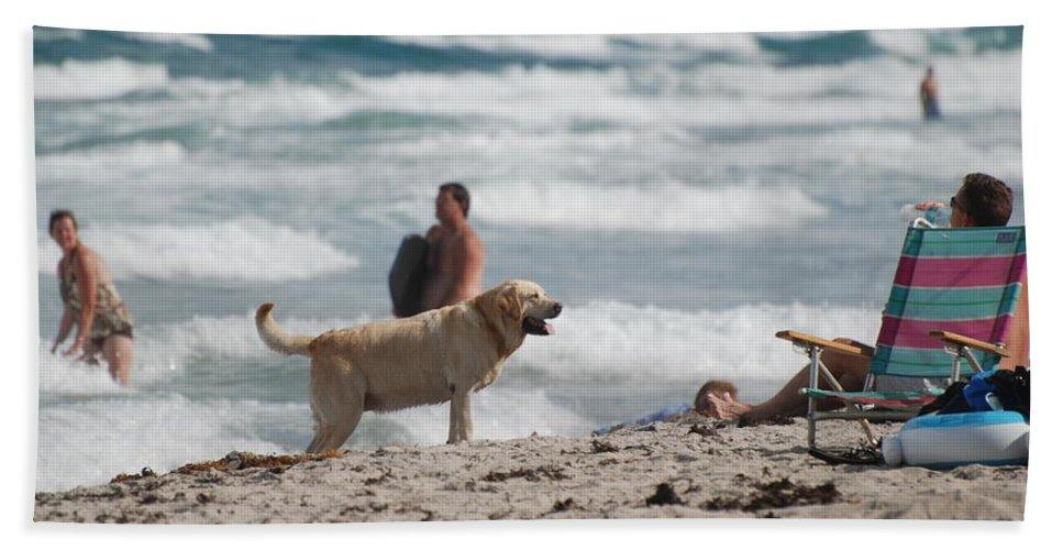 Waves Beach Towel featuring the photograph Ocean Dog by Rob Hans