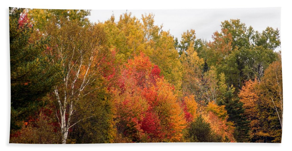 Foliage Beach Towel featuring the photograph October In Maine 4 by William Tasker