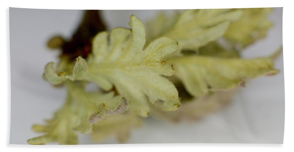 Macro Beach Towel featuring the photograph Oh So Small Oak Leaves by Joan D Squared Photography