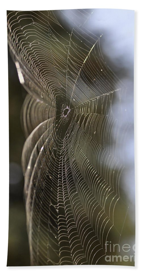 Clay Beach Sheet featuring the photograph Oh What Webs We Weave by Clayton Bruster