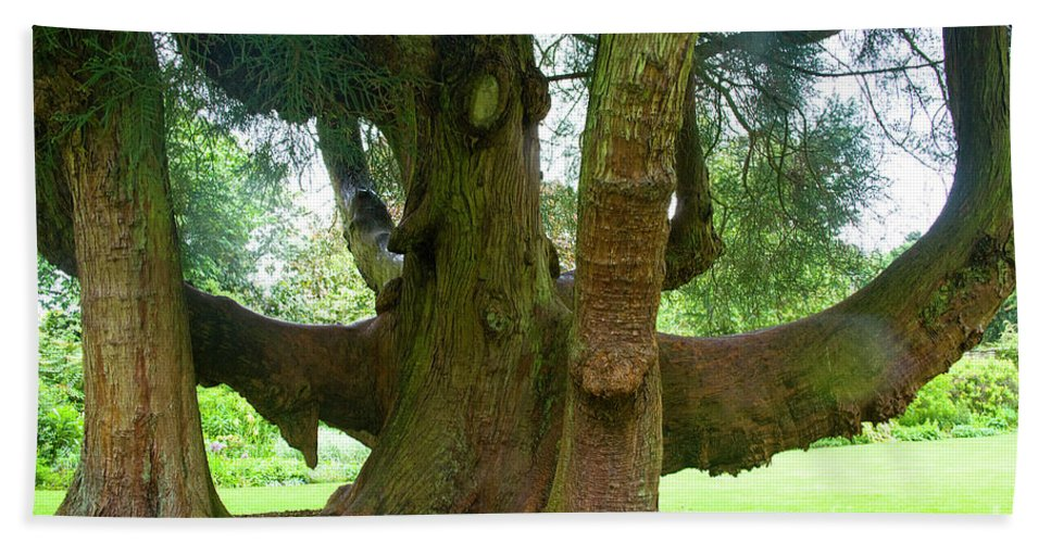 Tree Beach Towel featuring the photograph Old Huge Tree by Heiko Koehrer-Wagner