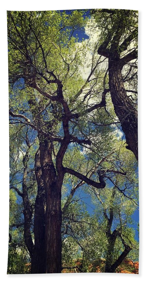 Tree Beach Towel featuring the photograph Old Trees by Sarah Jane Thompson
