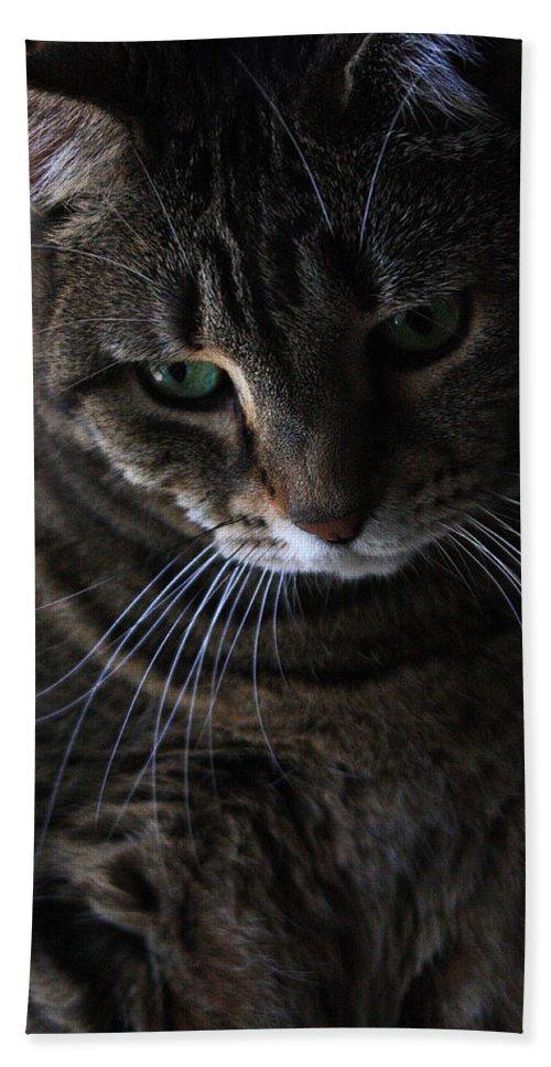 Cat Beach Towel featuring the photograph Ole Green Eyes by Joe Kozlowski
