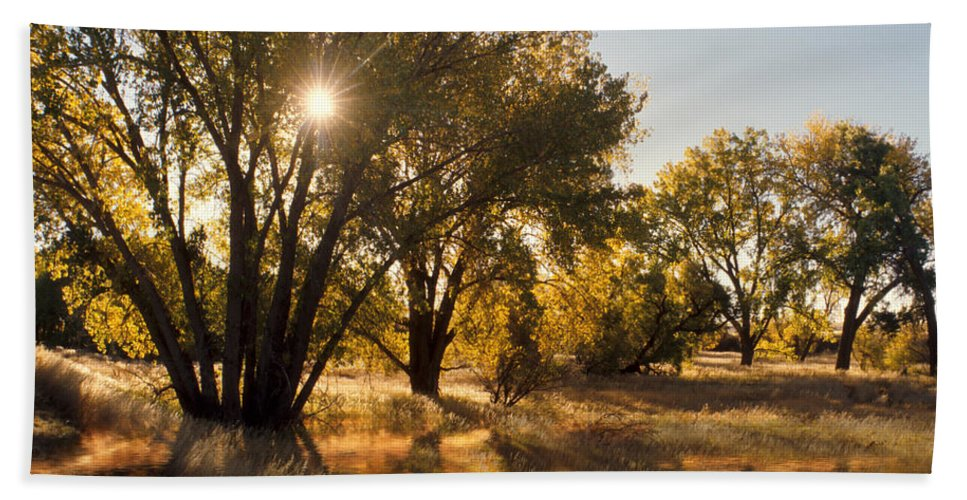 Ftrees Beach Towel featuring the photograph Oliver Sunbursts by Jerry McElroy