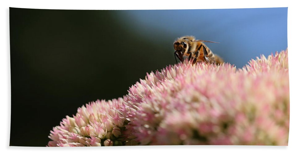 Bee Beach Towel featuring the photograph On Flower Mountain by Angela Rath
