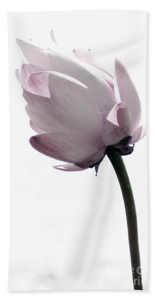 Lotus Beach Towel featuring the photograph On The Inside by Amanda Barcon