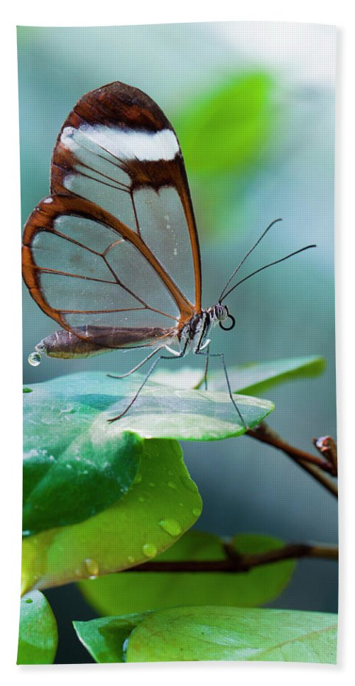 Butterfly Beach Towel featuring the photograph On Top Of The World by Jorn Van Hezik