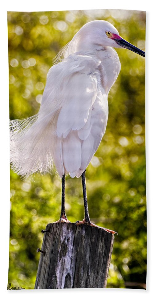 snowy Egret Beach Sheet featuring the photograph On Watch by Christopher Holmes