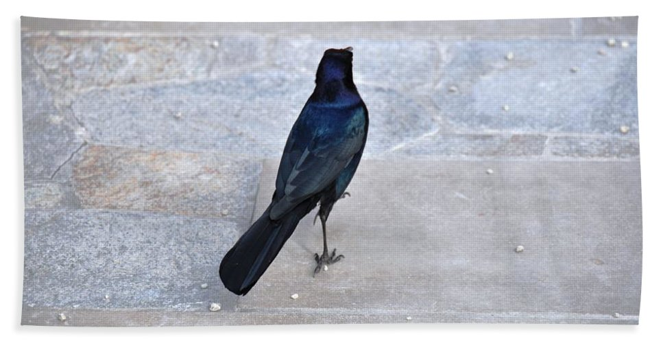 Bird Beach Towel featuring the photograph One If By Land by Rich Bodane