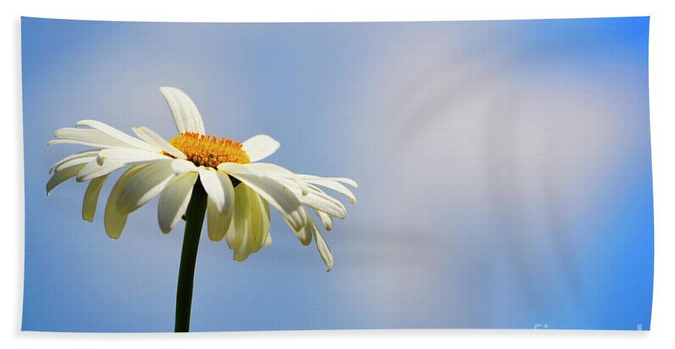 Daisy Beach Towel featuring the photograph One Wish by Traci Cottingham