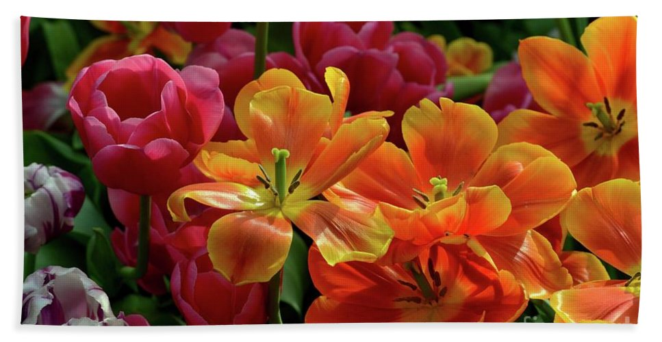 Tulip Beach Towel featuring the photograph Orange And Red Tulip Lilies In Various Stages Of Bloom by Imran Ahmed