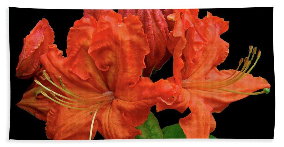 Azalea Beach Towel featuring the photograph Orange Azalea by Mother Nature