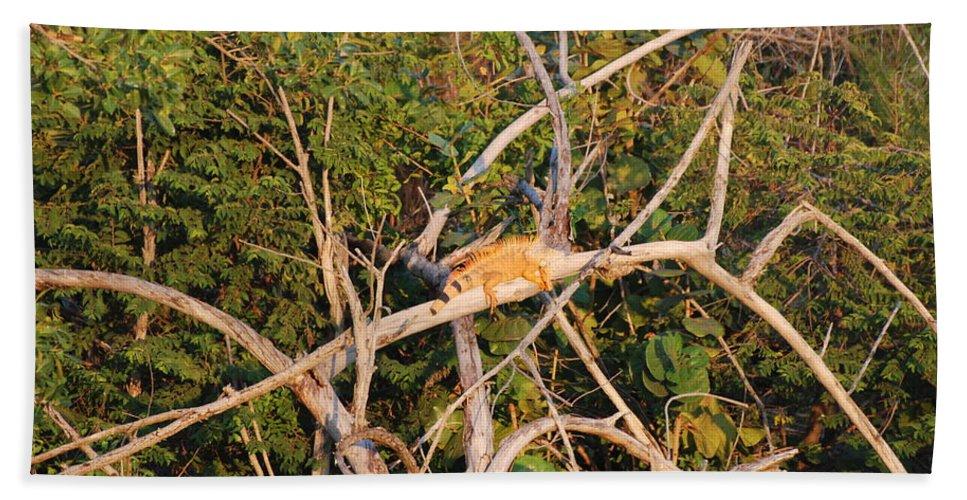 Wood Beach Towel featuring the photograph Orange Iguana by Rob Hans
