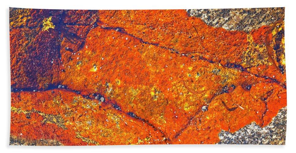 Lichen Beach Towel featuring the photograph Orange Lichen by Heiko Koehrer-Wagner