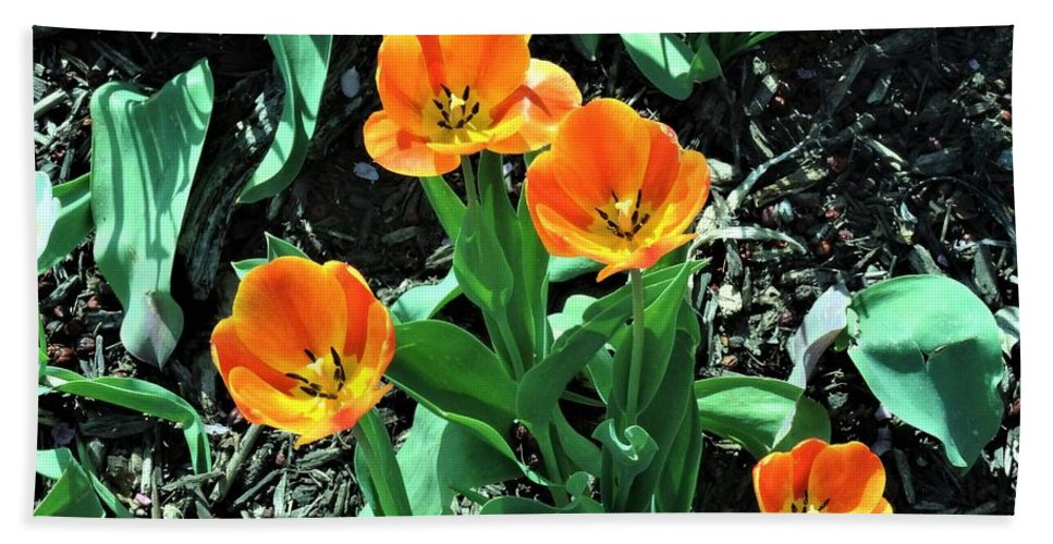 Orange Beach Towel featuring the photograph Orange Tulips by Scenic Sights By Tara